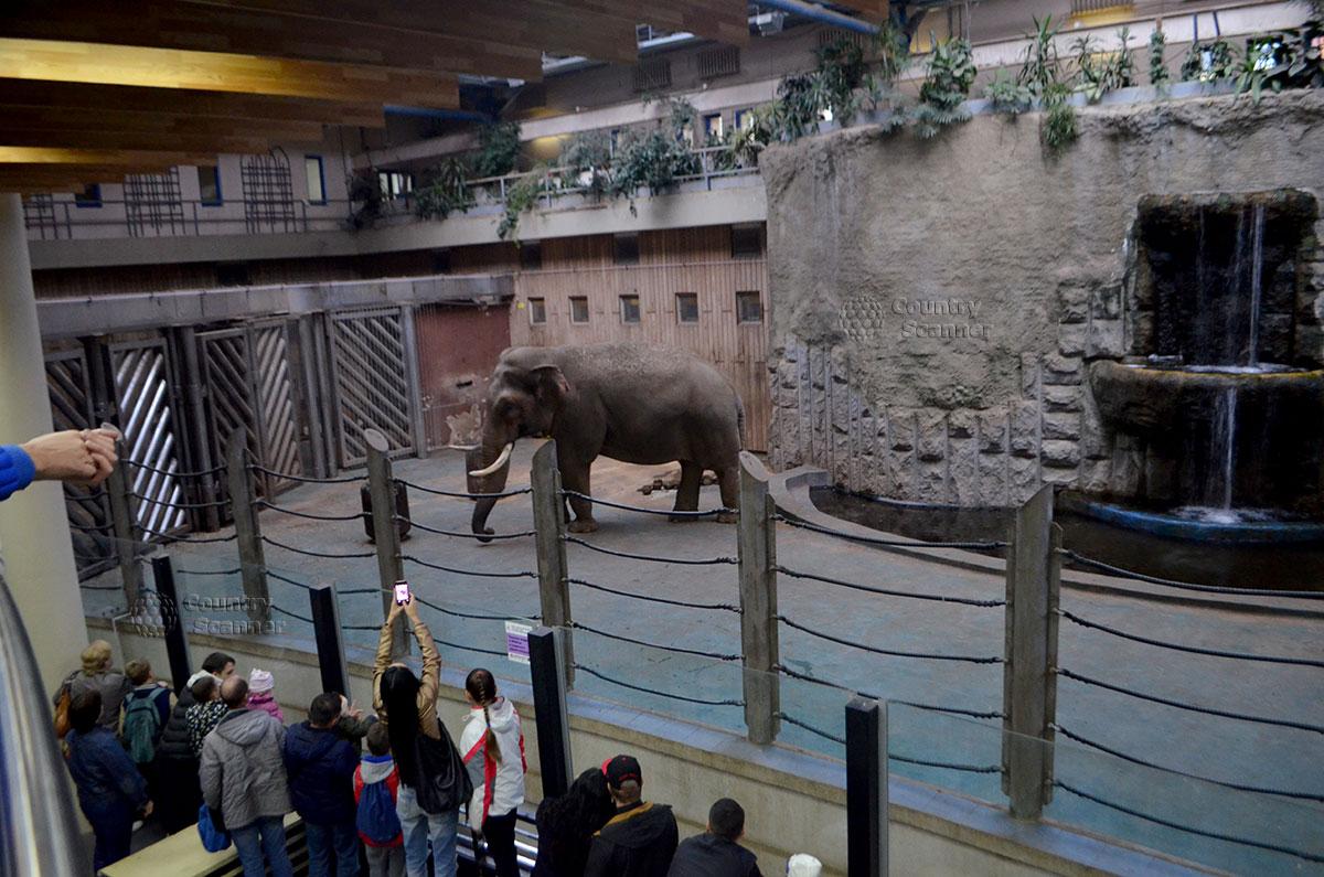 Московский зоопарк. Азиатский слон.