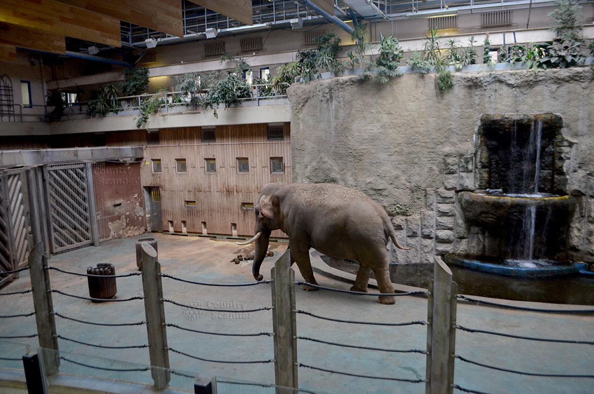 Московский зоопарк. Слон.
