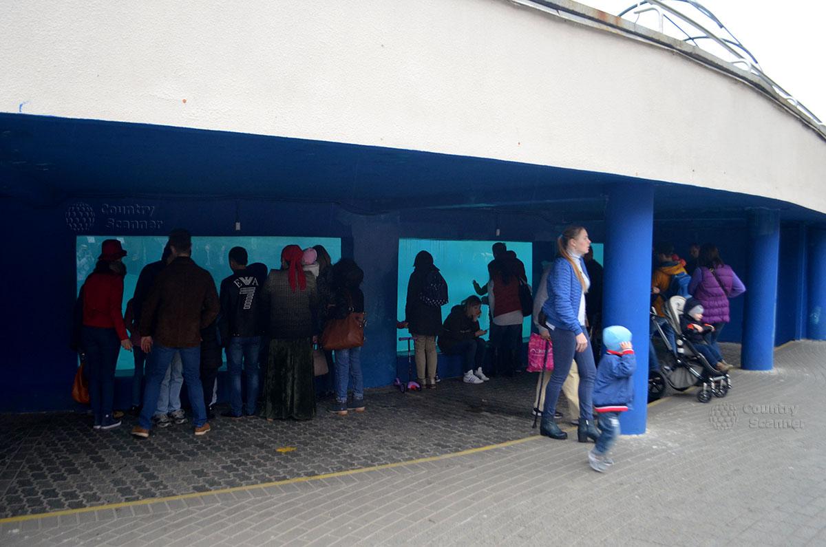 Юные посетители возле аквариума Московского зоопарка.