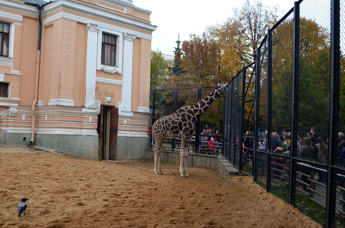 """Московский зоопарк. """"Дом жирафа""""."""