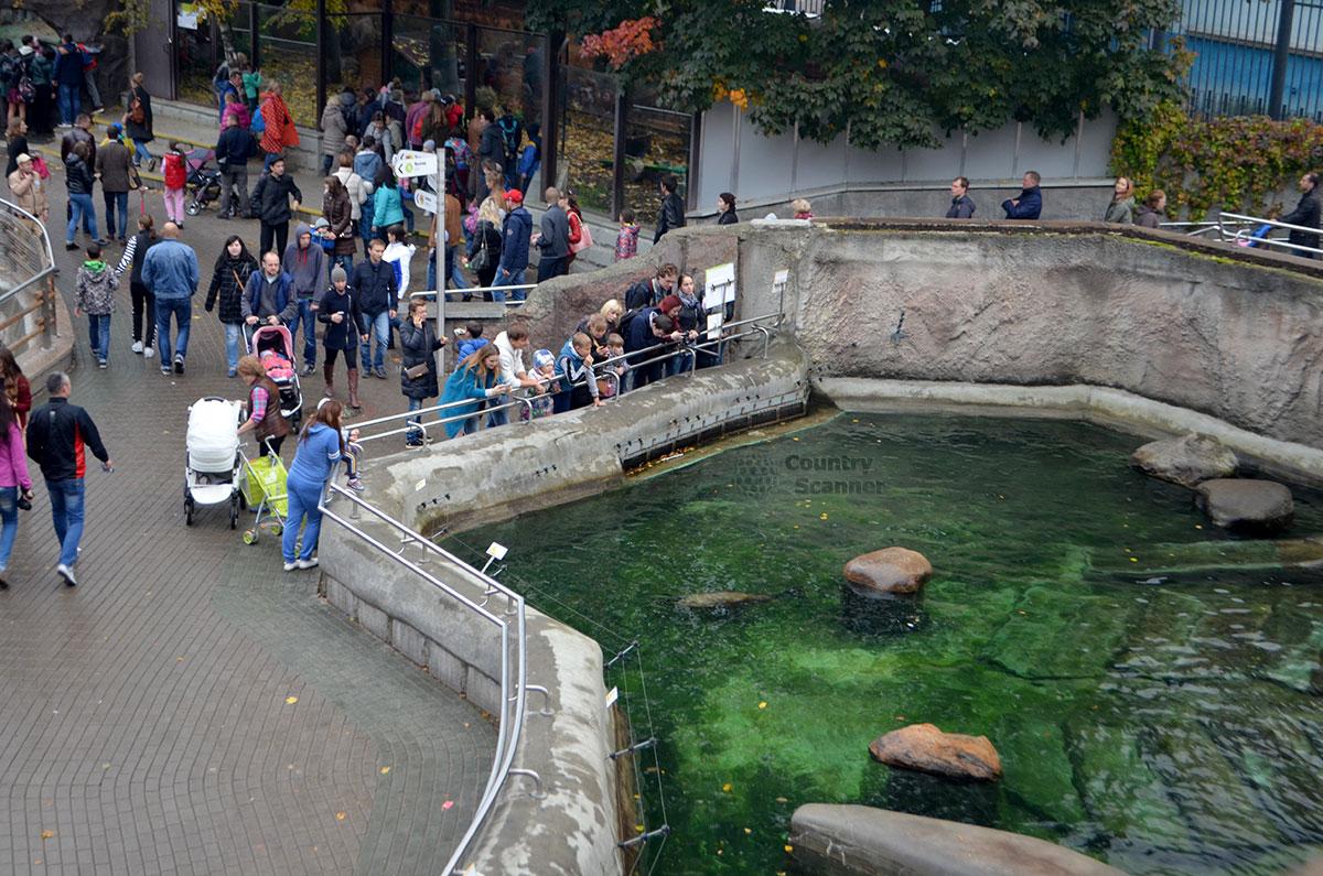 Выдра в Московском зоопарке.
