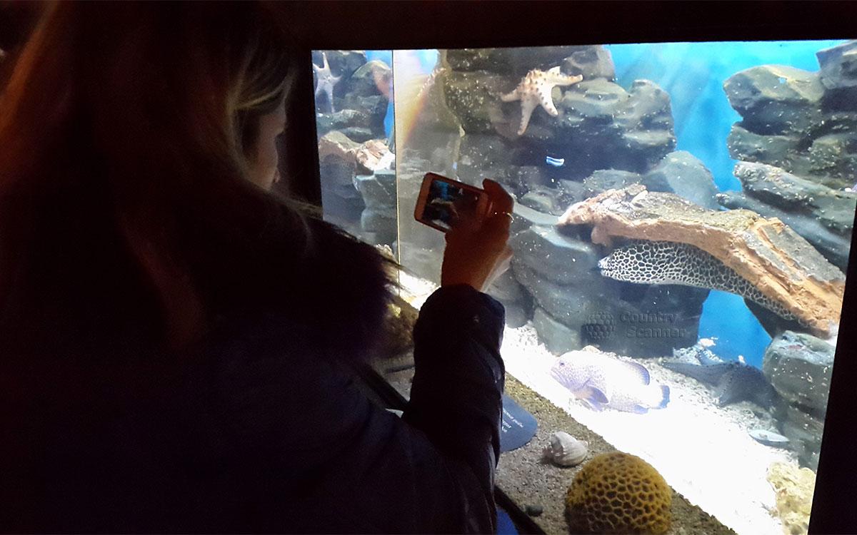 Московский зоопарк. Рифовые рыбы.