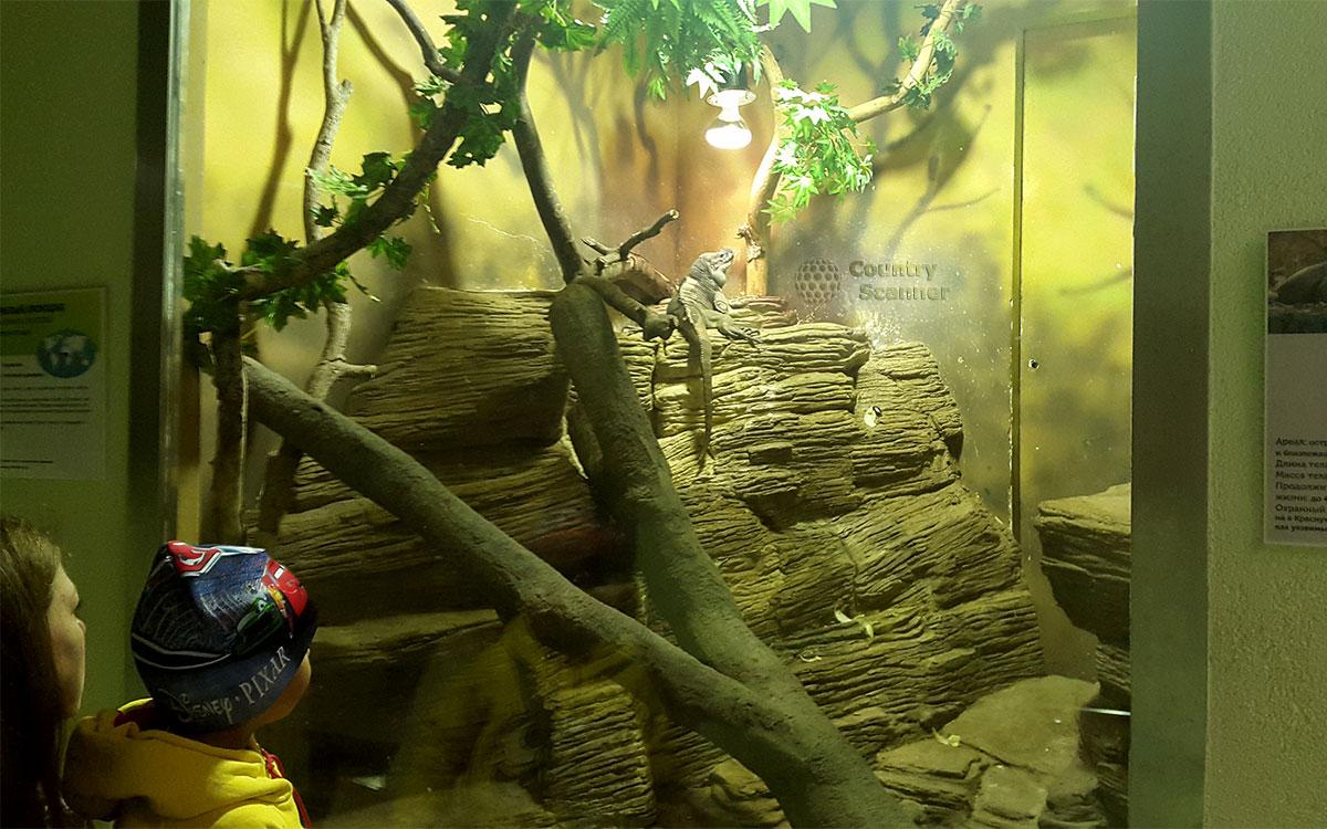 Московский зоопарк. Зеленая игуана.