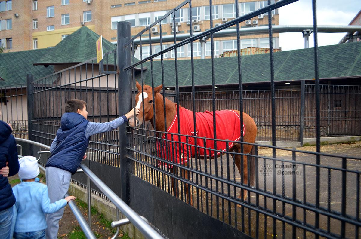 Московский зоопарк. Верховая лошадь.