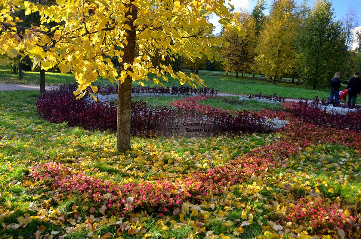 Аллея и газон в Воронцовском парке. Осень.