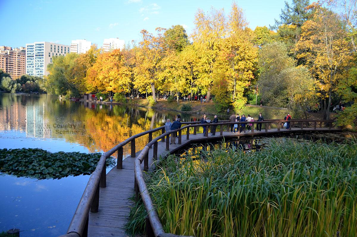 Пруд и мостик в Воронцовском парке