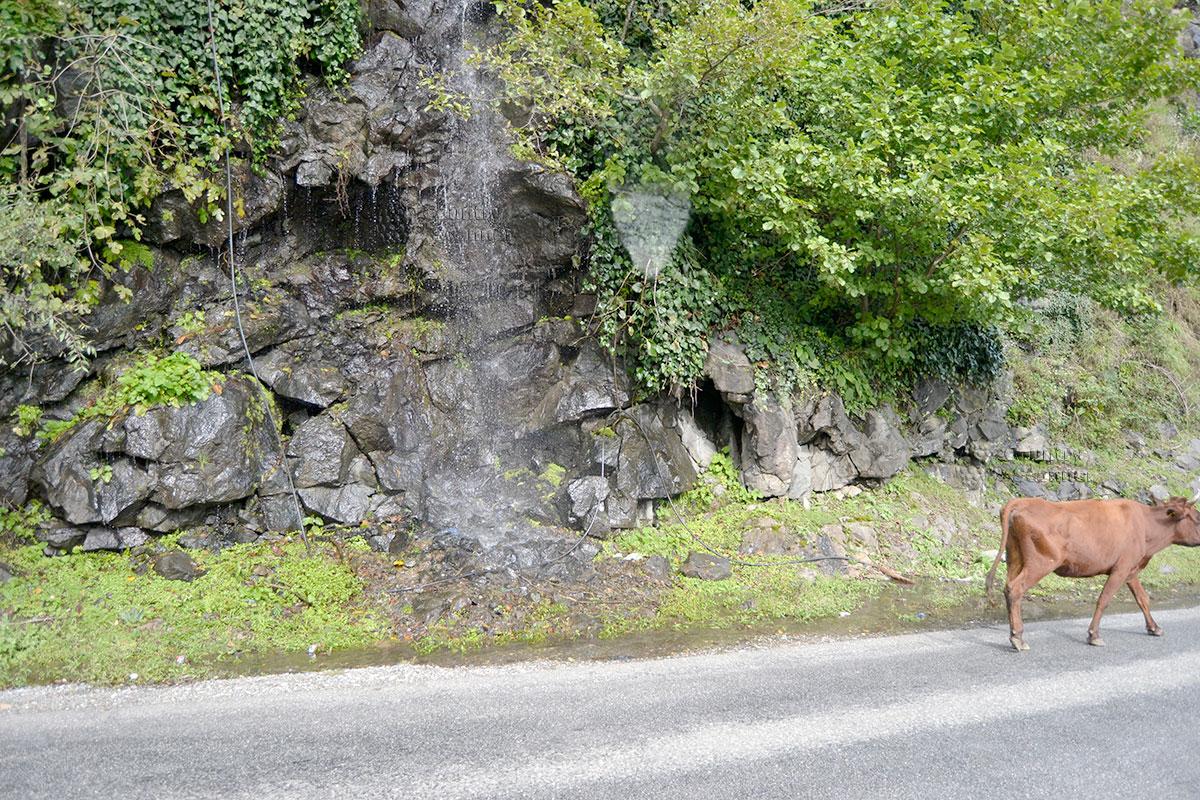 По дороге к водопаду Махунцети прогуливаются коровы