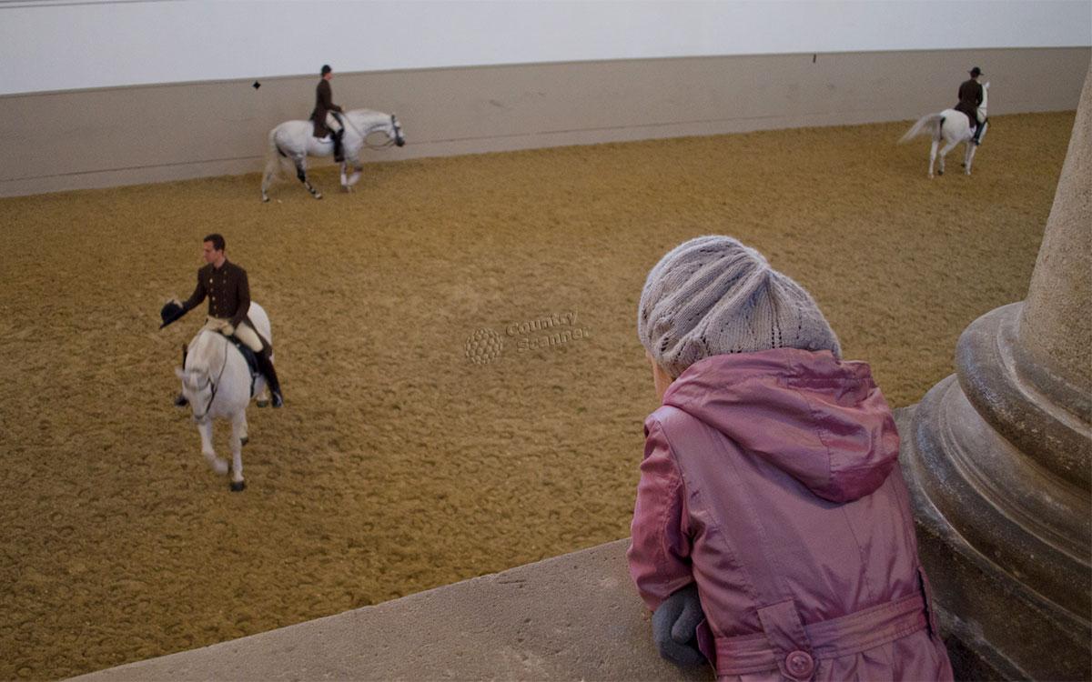 Испанская школа верховой езды. Внимание зрителей гарантировано.