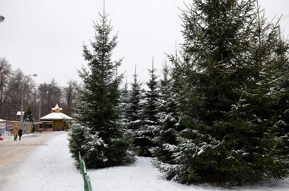 По дороге в московскую усадьбу Деда Мороза.