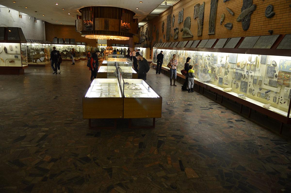 Палеонтологический музей в Москве – панорама экспозиции.