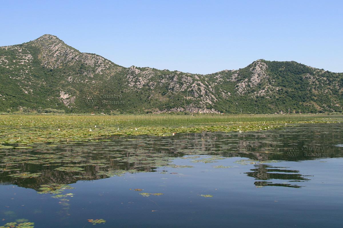 Cкадарское озеро в Черногории