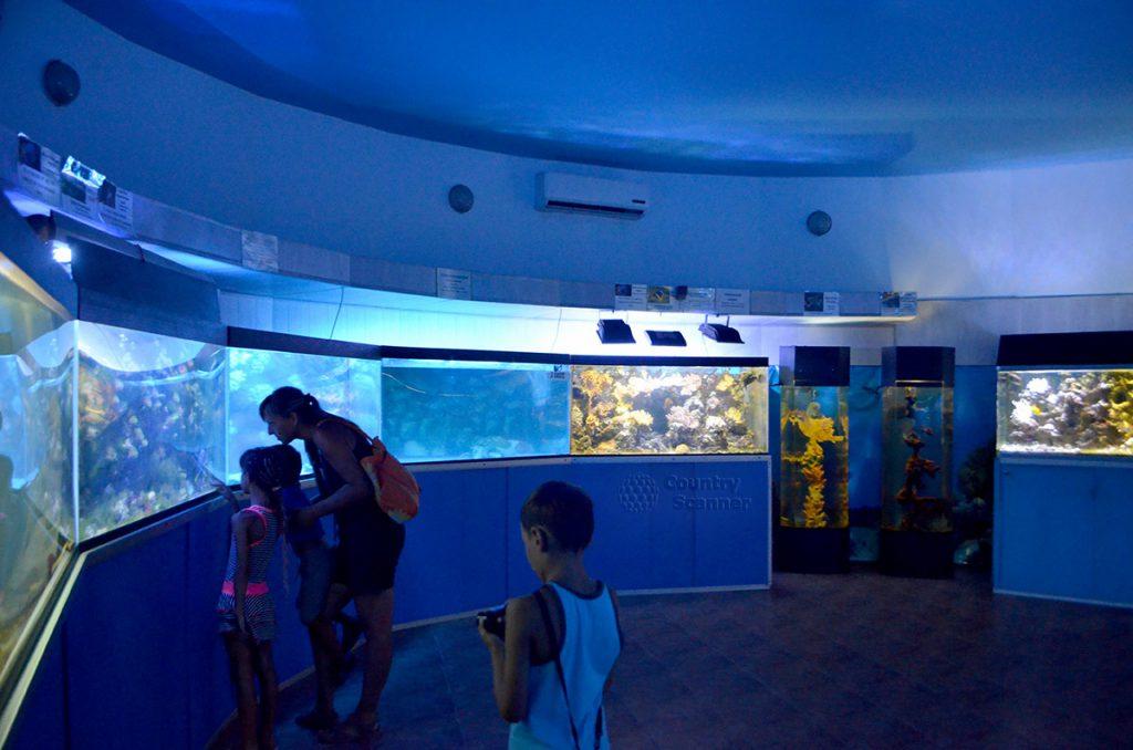 akvarium-v-dendrarii-countryscanner-1-1024x678.jpg