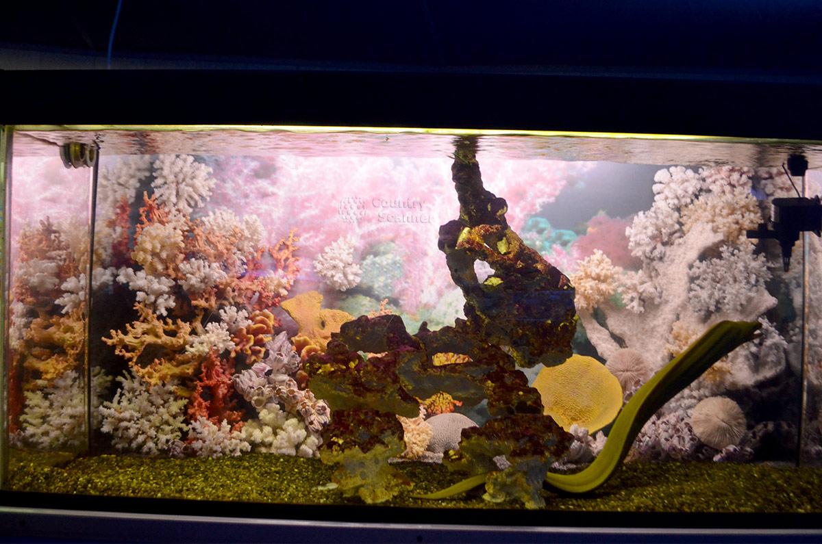 Разнообразие формы и окраски кораллов Аквариума в Дендрарии.