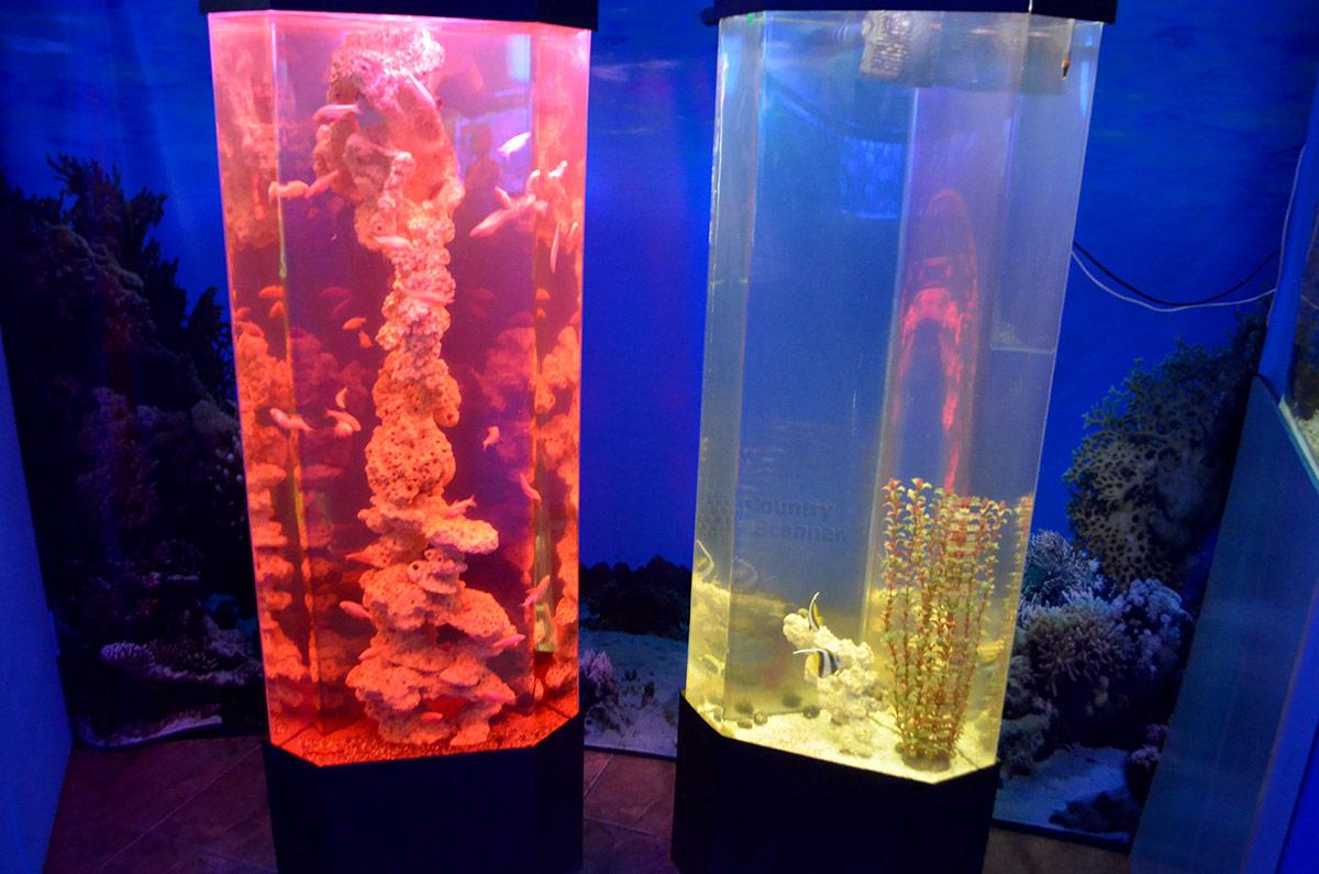 Подсвеченные емкости для кораллов, представляемые Аквариумом в Дендрарии.
