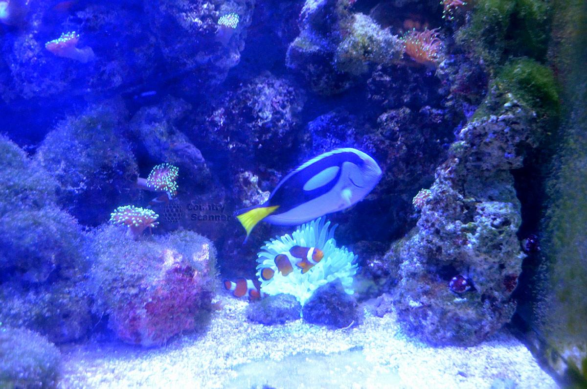 Коралловые рыбки, населяющие Аквариум в Дендрарии – самые яркие.
