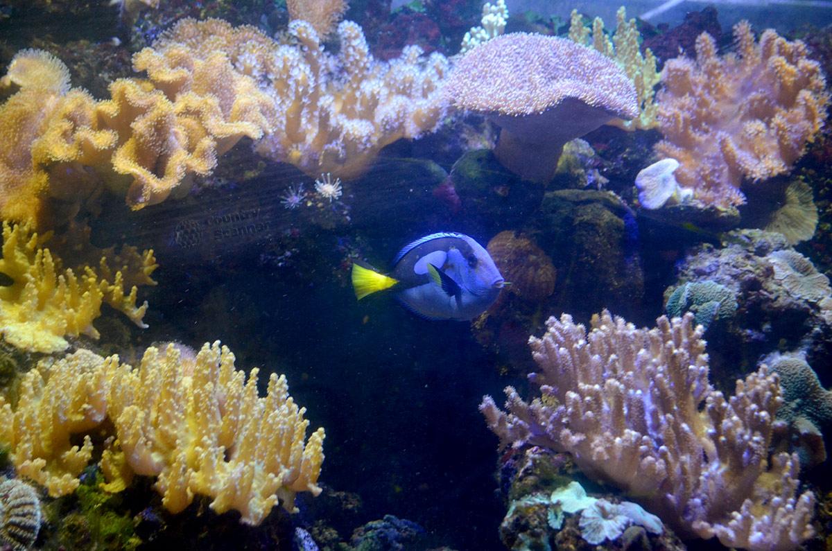 Расцветки кораллов и рыбок Аквариума в Дендрарии перекликаются между собой.