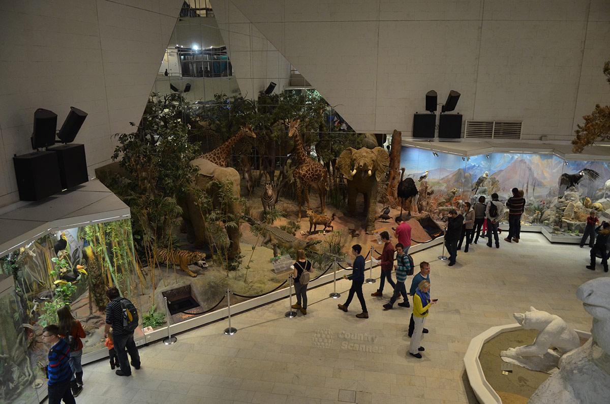 Фрагмент центральной экспозиции государственного Дарвиновского музея.