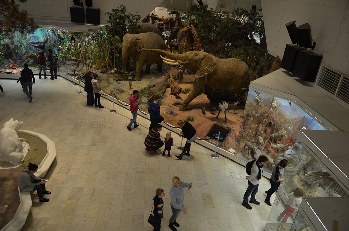 Государственный Дарвиновский музей. Вид экспозиции африканской природы.