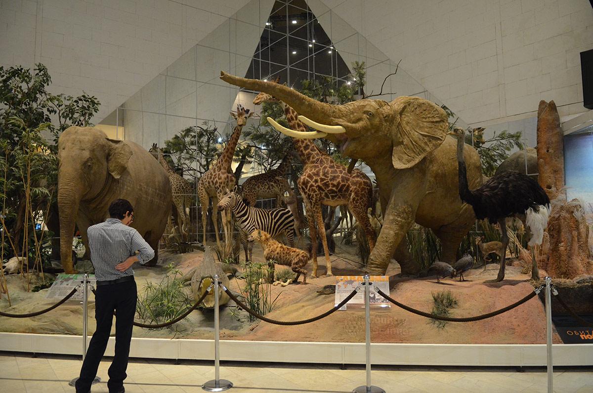 Вид вблизи на обитателей Африки в государственном Дарвиновском музее.