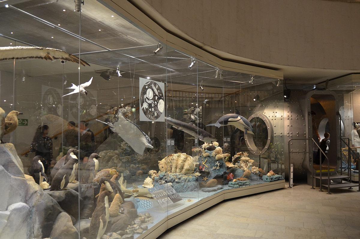 Государственный Дарвиновский музей представляет обитателей океана.