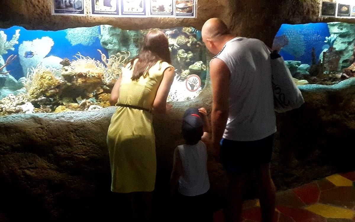 Посетители океанариума в Ривьере внимательно рассматривают живые экспонаты и оформление аквариумов.