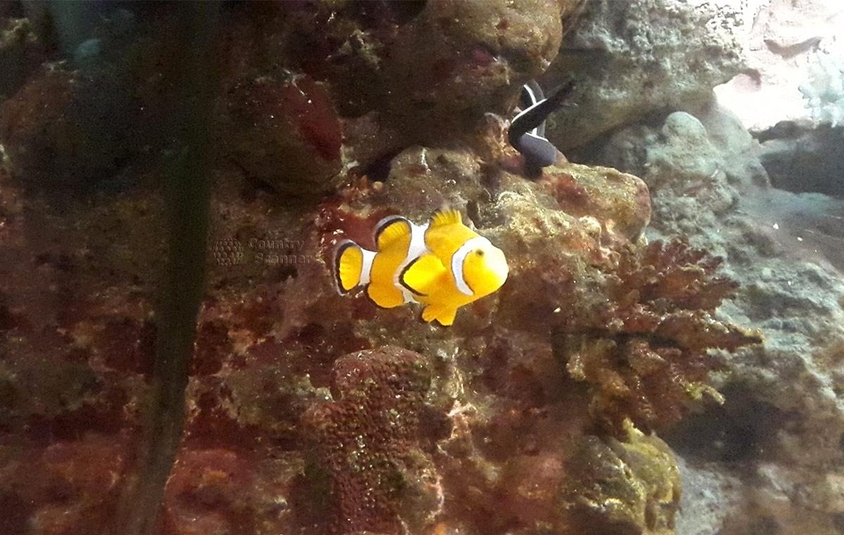 Разнообразие кораллов и рыба – бабочка украшают океанариум в Ривьере.