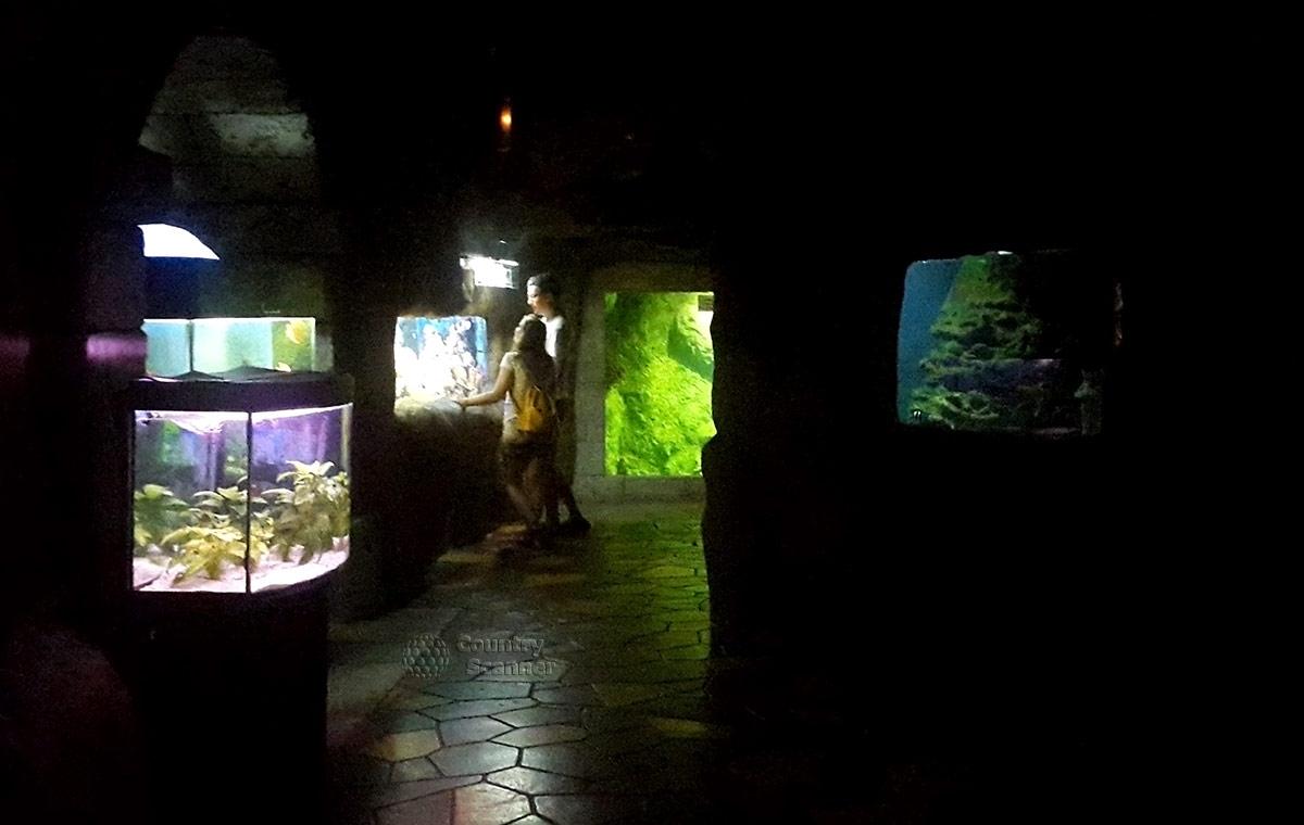 Прощальный взгляд на экспозицию океанариума в Ривьере.