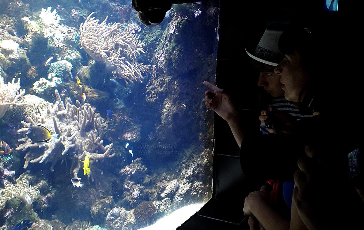 Сочинский океанариум. Пресноводные рыбы.