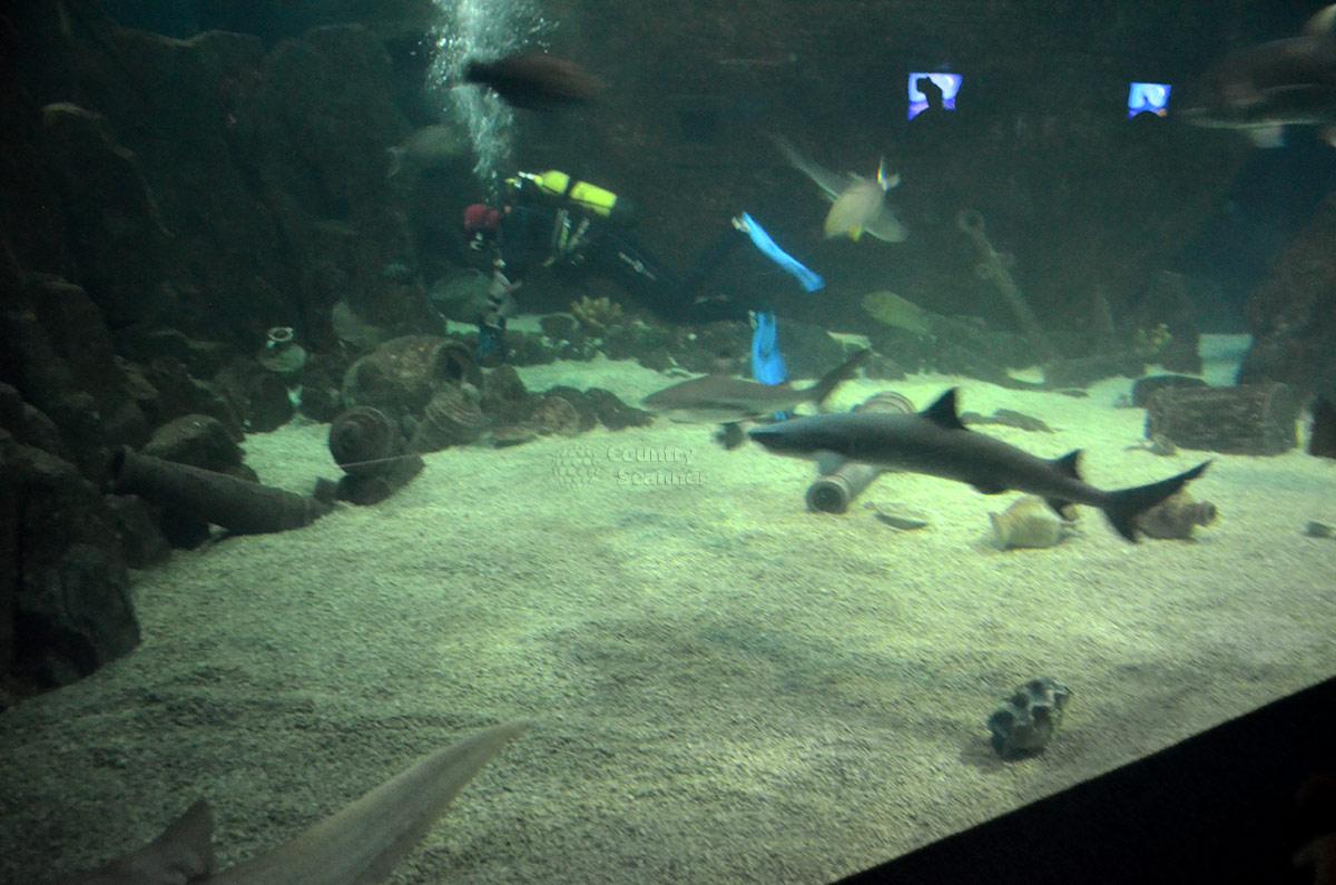 Сочинский океанариум. Кормление акул.