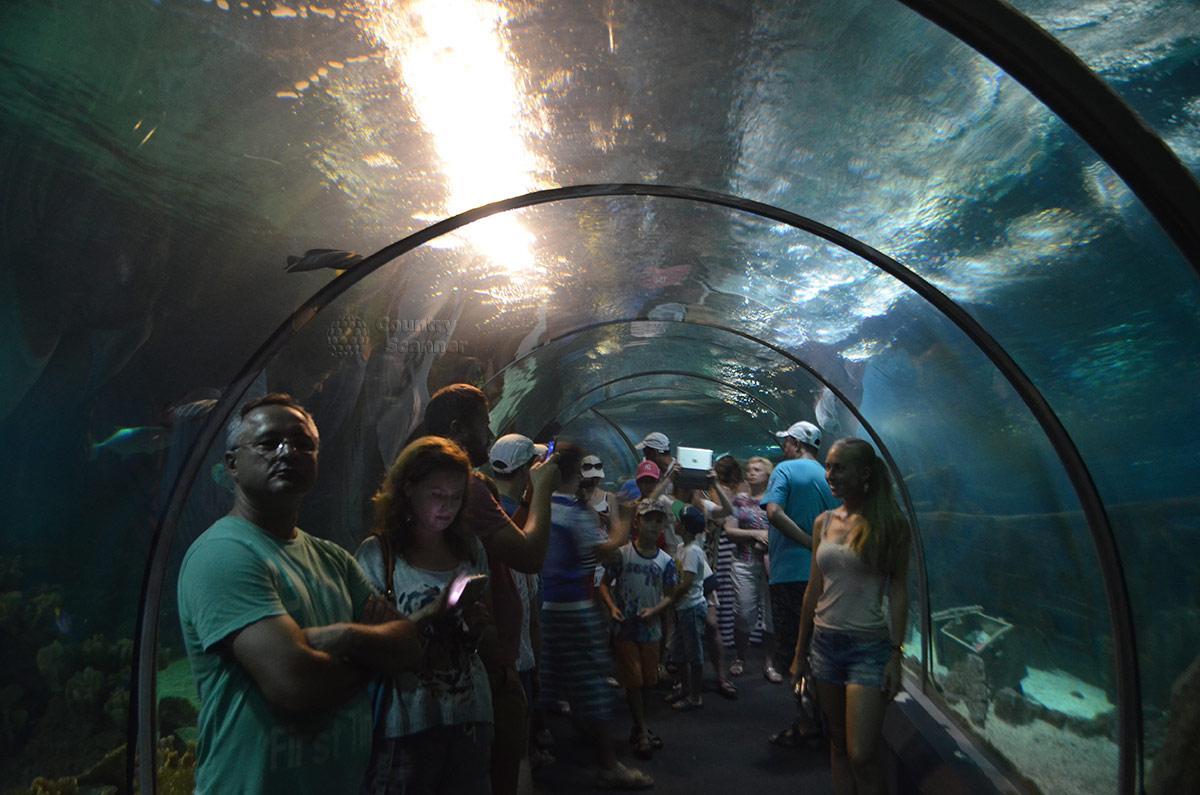 """Сочинский океанариум. Тоннель в """"подводное царство""""."""