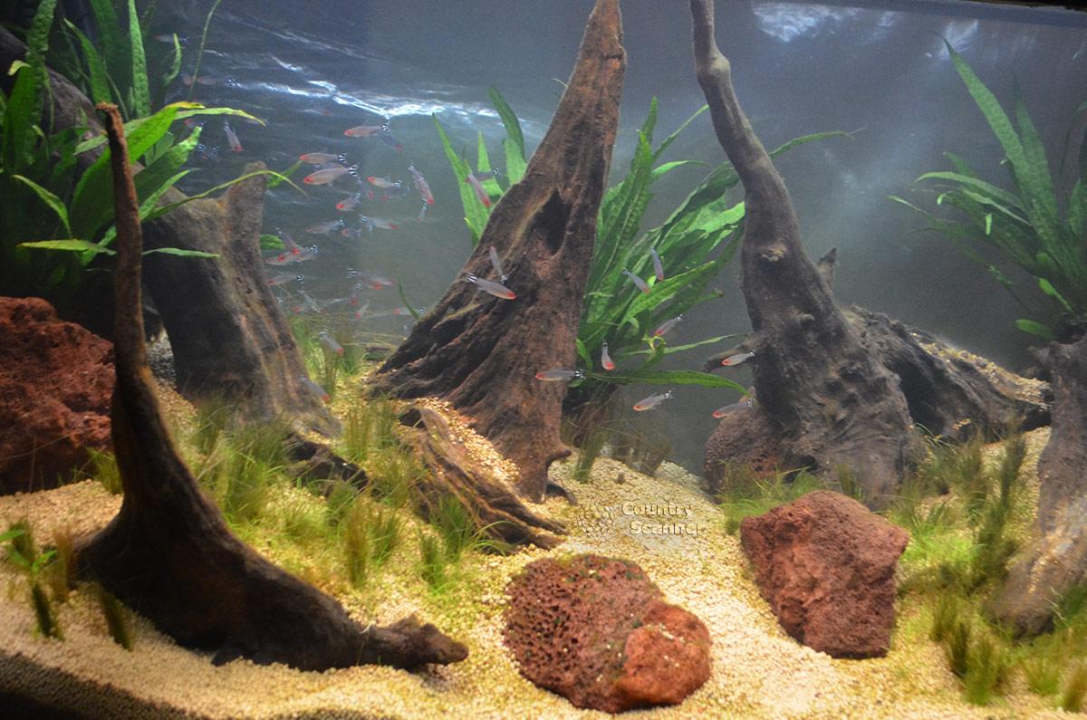 Сочинский океанариум. Шустрые рыбки в привычной среде обитания.