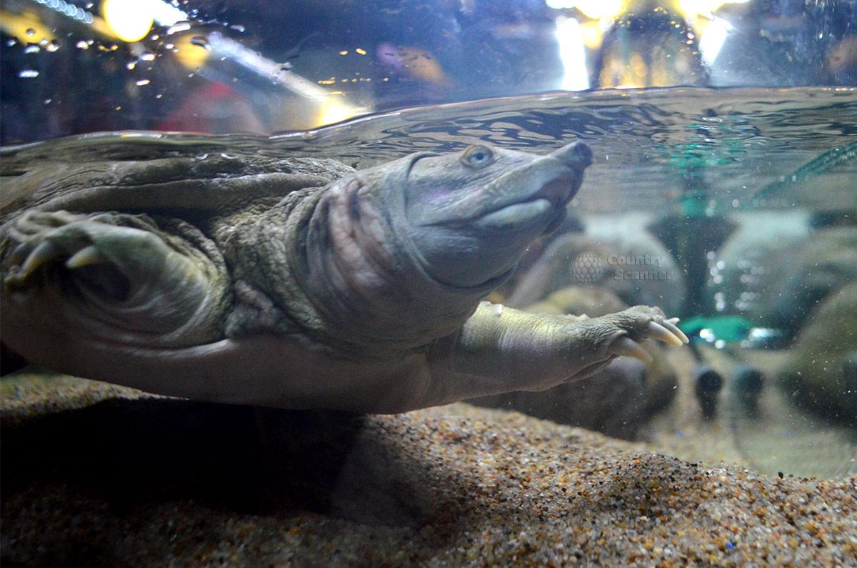 Сочинский океанариум. Черепаха.