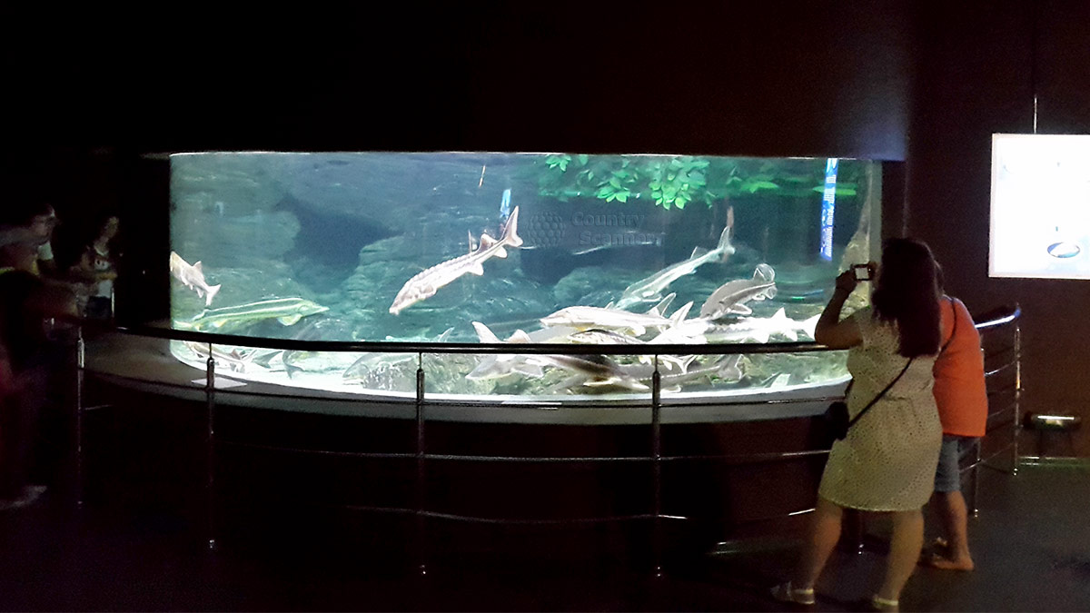 Морские обитатели сочинского океанариума.