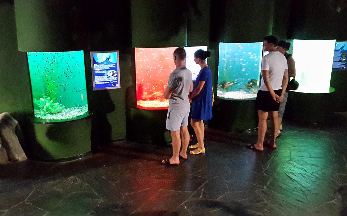 Сочи парки. Туристы возле разноцветных аквариумов.