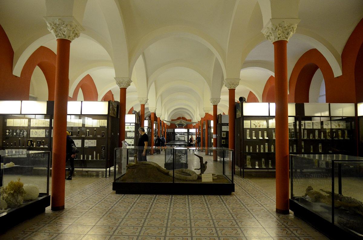 Зоологический музей МГУ. Общий вид нижнего этажа: экспонаты и архитектурное исполнение.