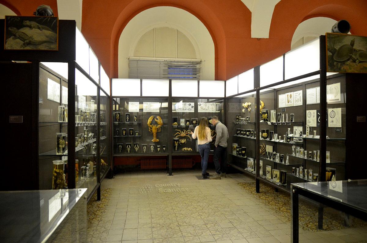 Экспозиционные стенды зоологического музея МГУ (нижний этаж).