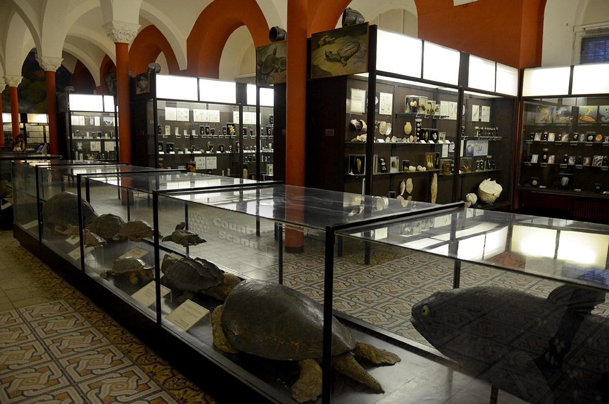 Зоологический музей МГУ, витрина черепах и ископаемая рыба – латимерия.
