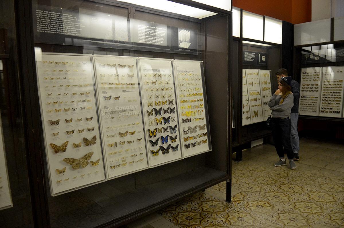 Коллекция насекомых зоологического музея МГУ, стенд бабочек.