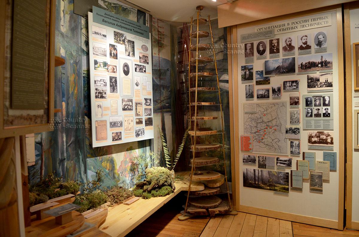 Пирамида срезов древесных стволов различных пород деревьев в музее леса. Исторические стенды о выдающихся деятелях лесной отрасли.
