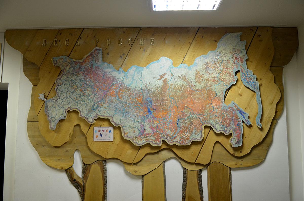 Карта распределения лесных массивов на территории России в музее леса. Очевидна неравномерность по различным регионам.