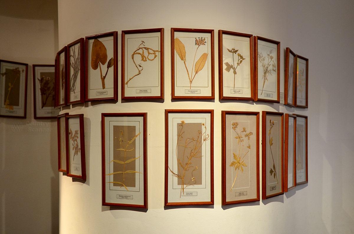 Музей леса представляет гербарии лекарственных растений. Значительная часть лекарственных препаратов готовится именно из растительного сырья.