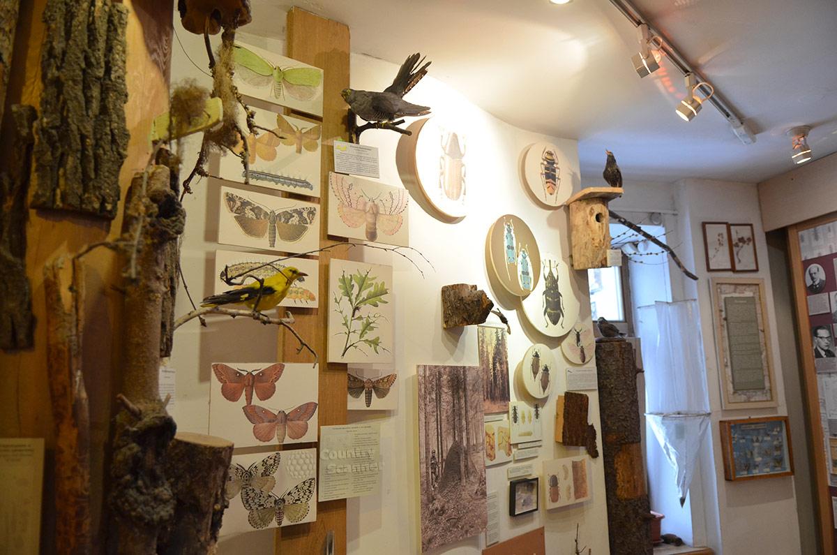 Стенд о вредителях деревьев в музее леса. Представлены бабочки и жуки, чьи личинки и гусеницы повреждают древесину, и те птицы наших лесов, которые избавляют от вредителей.