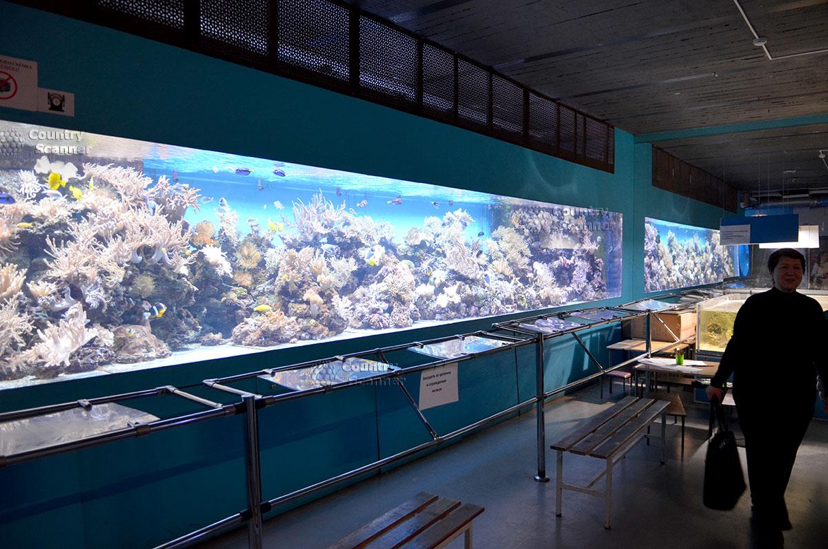 Уникальный морской аквариум - знакомство с подводным царством.