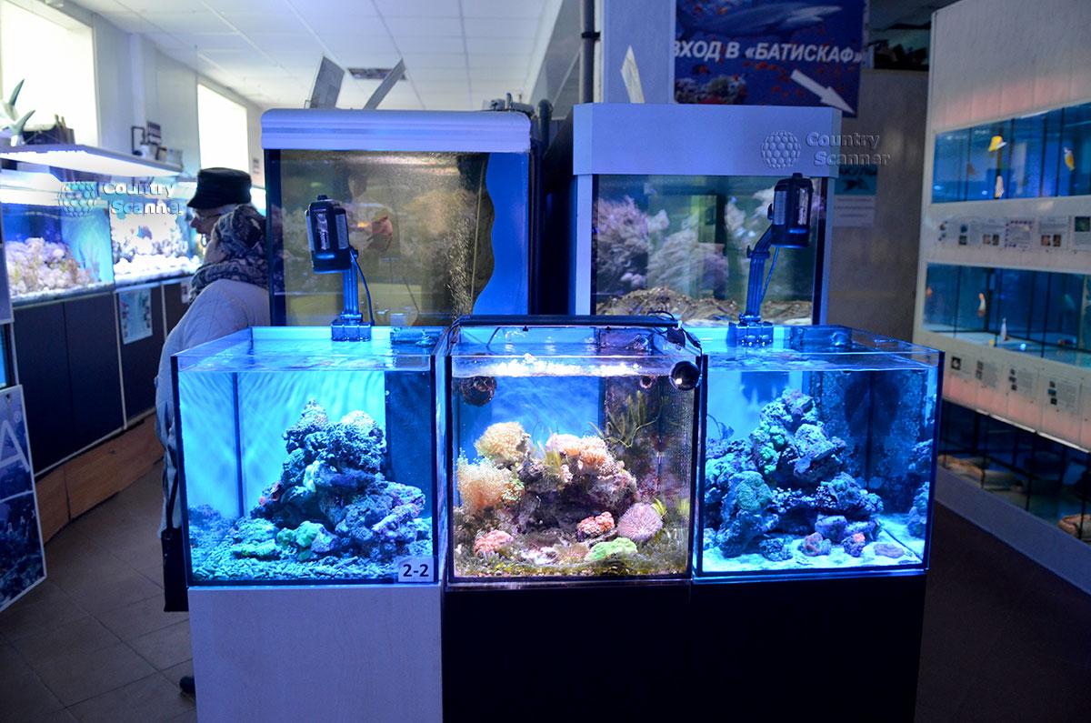 Один из аквариумных комплексов Морского аквариума на Чистых прудах