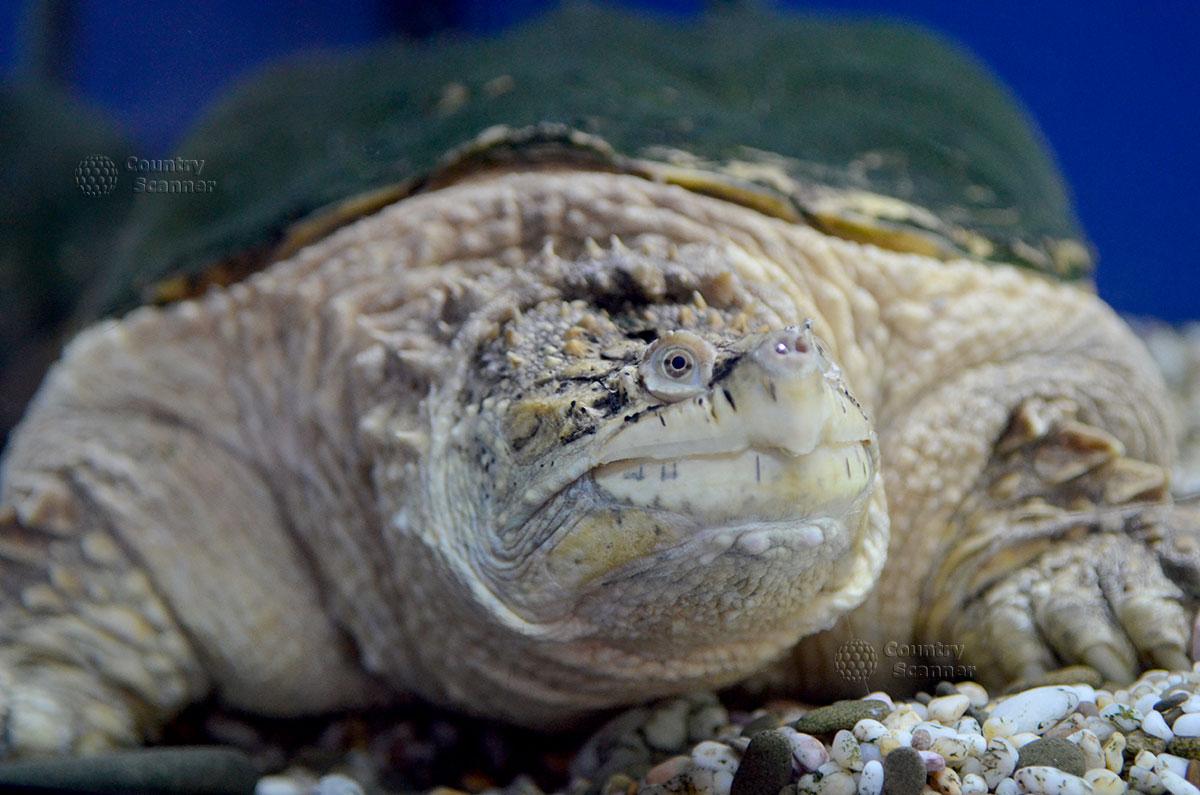 Морской аквариум. Черепаха.