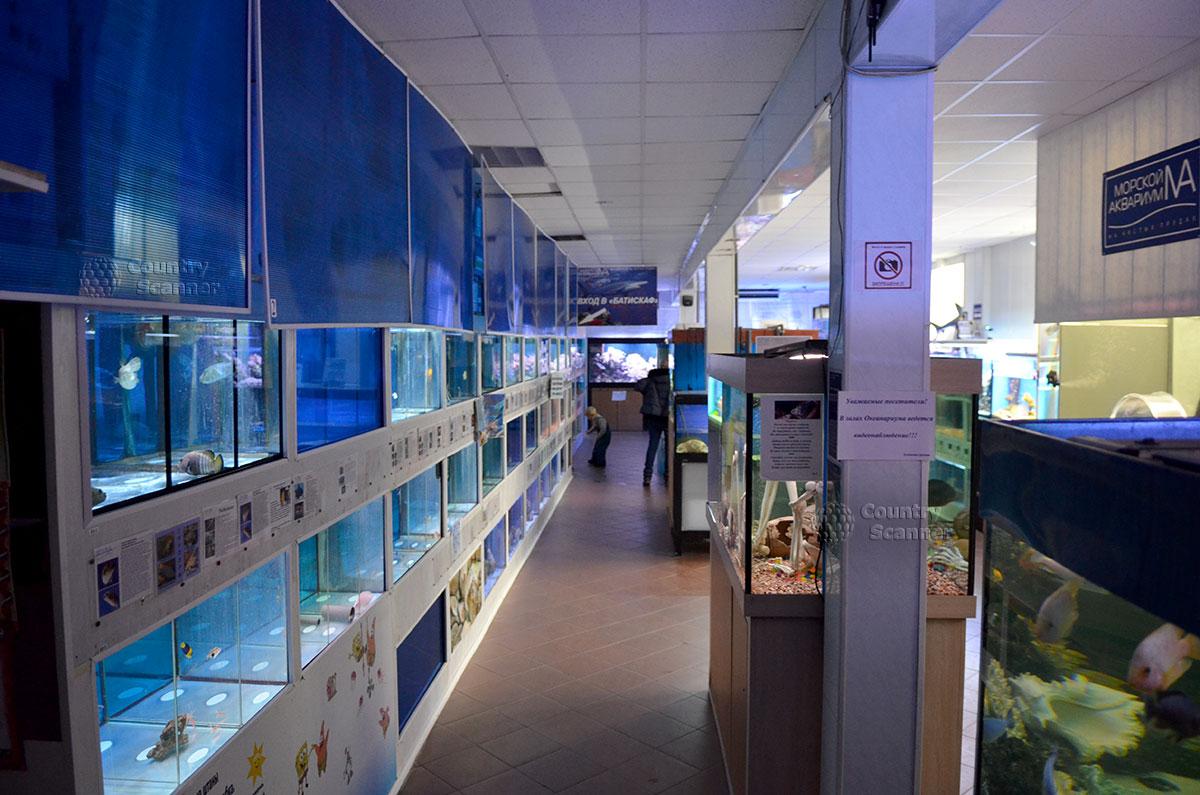 Морском аквариуме на чистых прудах и его бесчисленные питомцы.