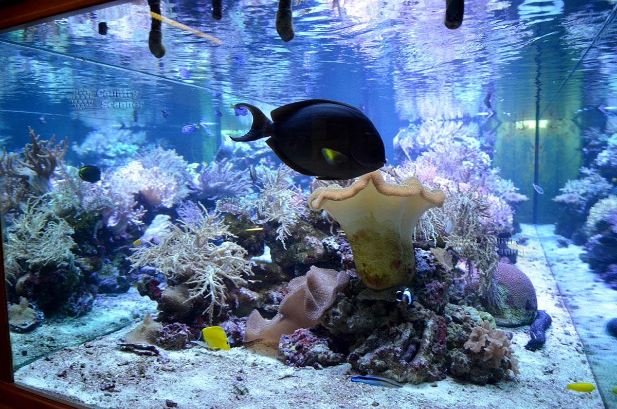Морской аквариум с пульсирующими кораллами.