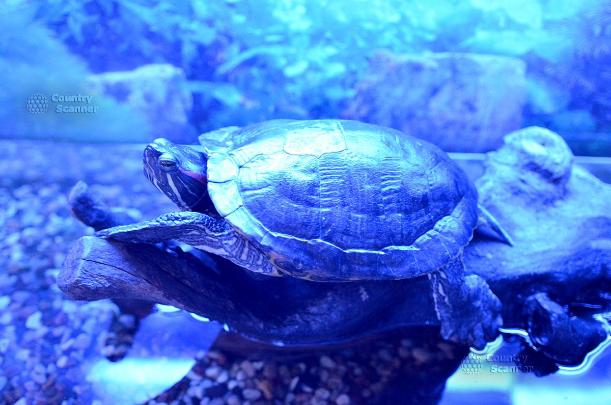"""Морской аквариум. Черепаха на выставке """"Коралловый сад""""."""
