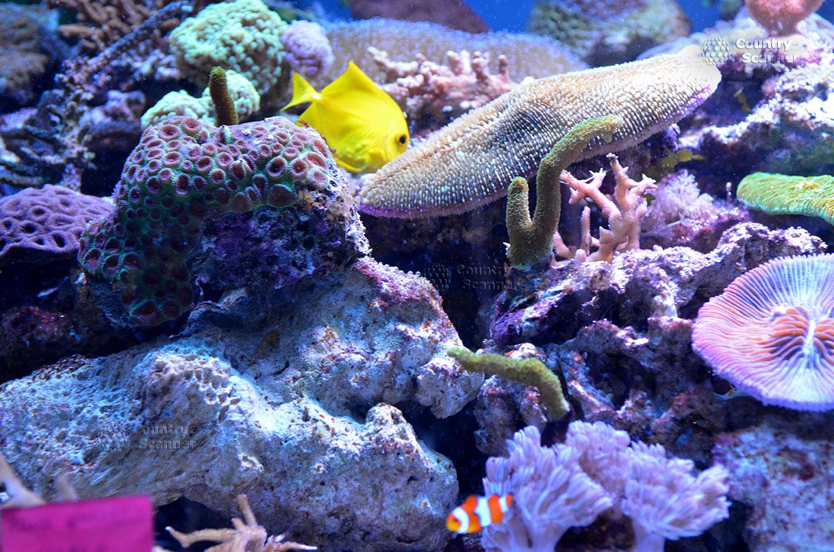 Морской аквариум. Пестрые представители подводной фауны.