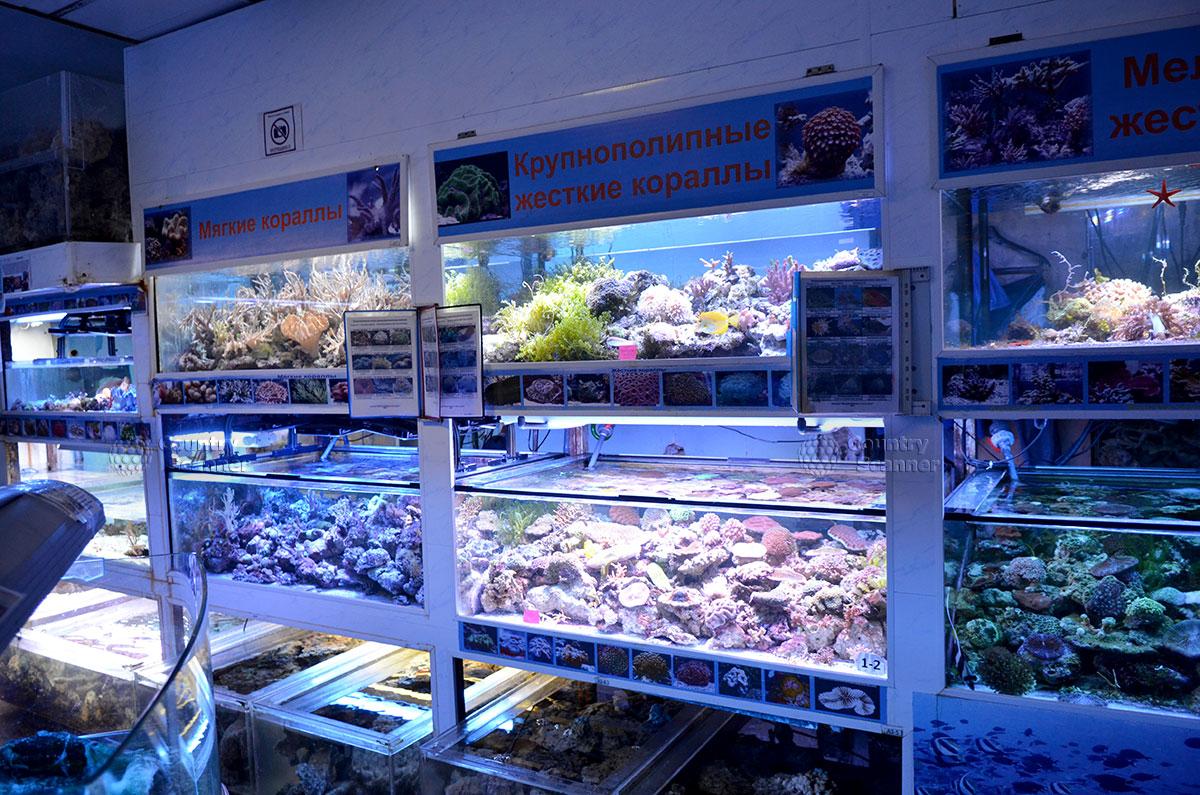 Всевозможные кораллы в морском аквариуме.